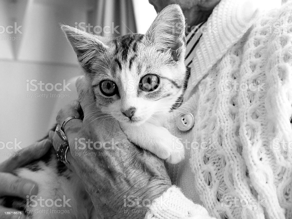 Pet Therapy Kitten royalty-free stock photo