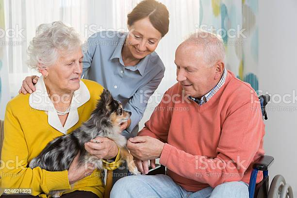 Pet therapy senior couple with little dog picture id524621323?b=1&k=6&m=524621323&s=612x612&h=bvql25ivn6c mkx0neo2wphe4s0a  1t9k9a5qldgme=