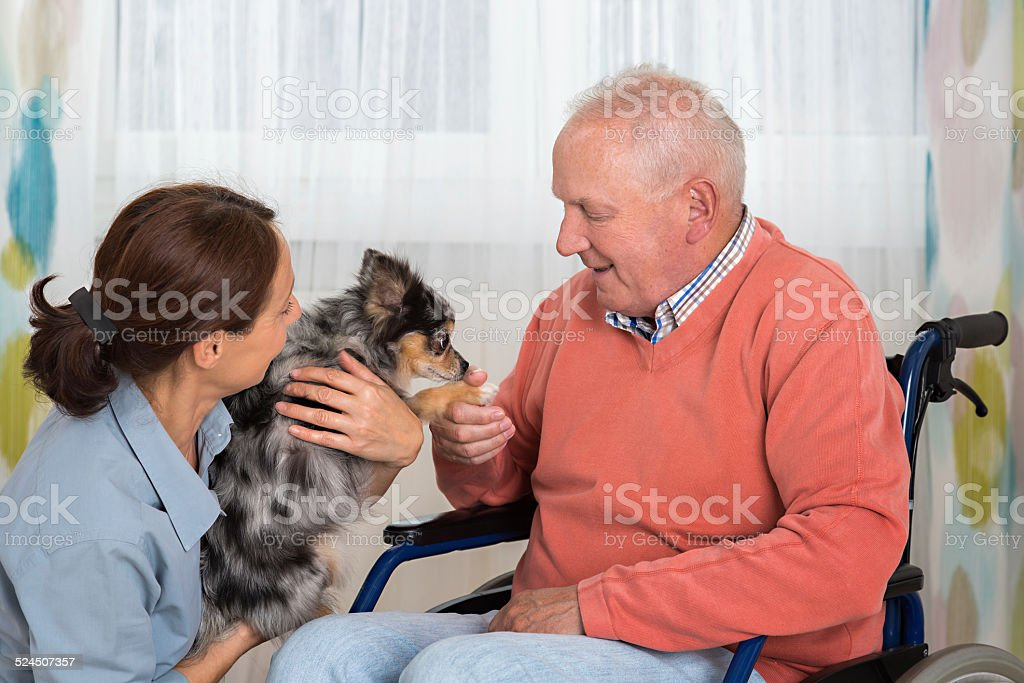 Pet Therapy – Senior man with little dog stock photo