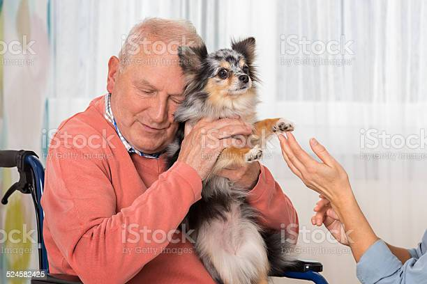 Pet therapy senior man with little dog picture id524582425?b=1&k=6&m=524582425&s=612x612&h=aqdrxtpfbawmrwl8cntndov5bzqrawrcfnyhismlkrm=
