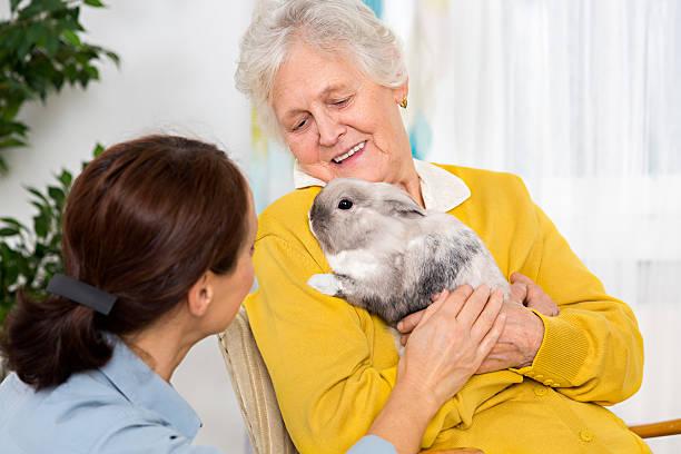 Pet therapy senior woman with rabbit at home picture id524285131?b=1&k=6&m=524285131&s=612x612&w=0&h=xcsitwxrzbsp4tkuj81enhv1zegr1edoeesudmyxbjs=