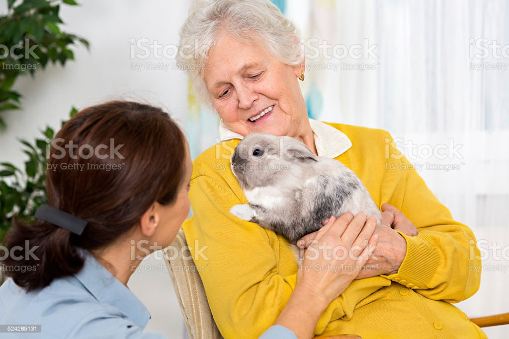 Pet Therapy – Senior woman with rabbit at home stock photo