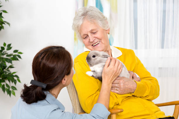 Pet Therapy – Senior woman with rabbit stock photo