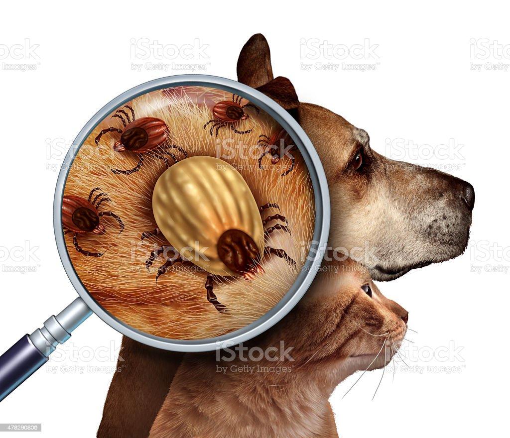 Pet Tick stock photo