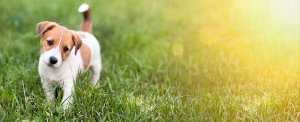 Pet training concept cute happy puppy dog banner picture id988664176?b=1&k=6&m=988664176&s=612x612&w=0&h=zmgynrqzzqegiluw3tvjt hl8tmbz xavuay8lmr5qo=