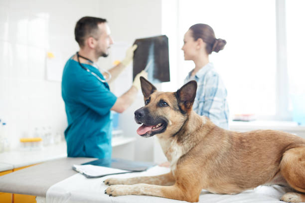 Cтоковое фото Pet visiting vet