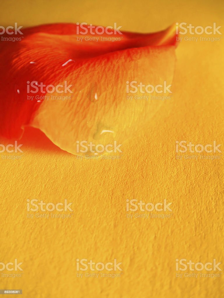 Fond de pétales de fleurs photo libre de droits