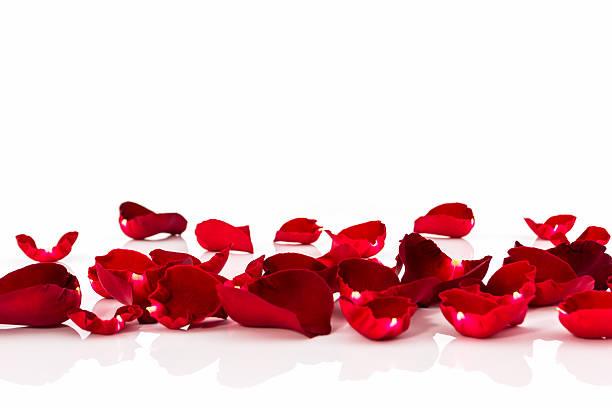 Petal of red rose picture id534833789?b=1&k=6&m=534833789&s=612x612&w=0&h= ug4rzh35 m4plqrxfihkkj3ynoqtctmovi b17kcdu=