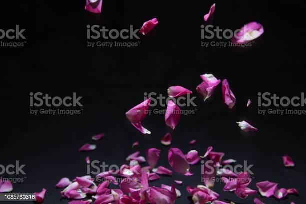 Petal of rose in falling picture id1085760316?b=1&k=6&m=1085760316&s=612x612&h=8hb1xon8qpurbtc4qxdgtpfgqcduiaagajdykbfrfb0=