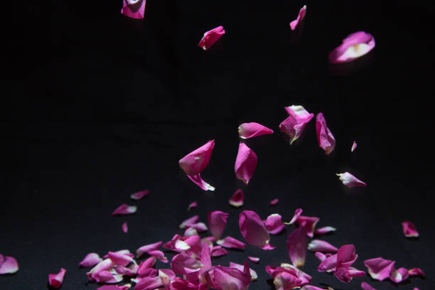 Petal of rose in falling picture id1085760316?b=1&k=6&m=1085760316&s=612x612&w=0&h=iigx83awteyc5xs75t0jgythg1gd96yuzbntu6sjjky=