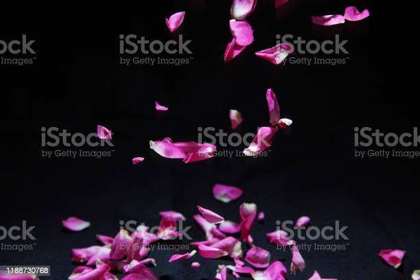 Petal of rose in falling picture id1188730768?b=1&k=6&m=1188730768&s=612x612&h=sa3ccnzfmjhltabjevl9vhyt u5ssydjna6tnvfmk7c=