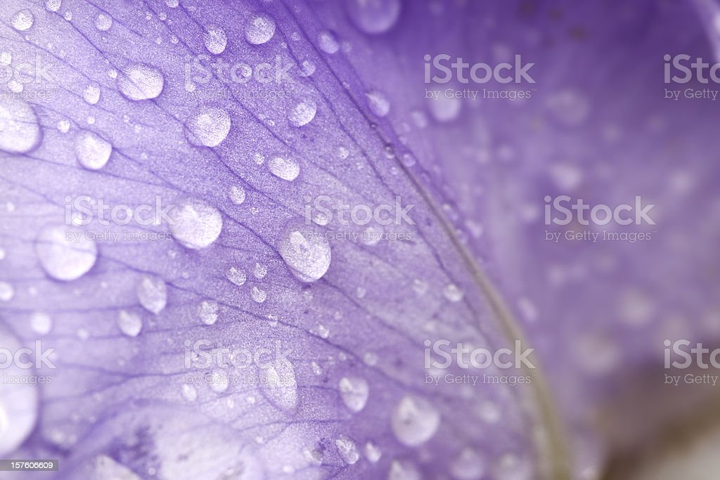 Petal stock photo