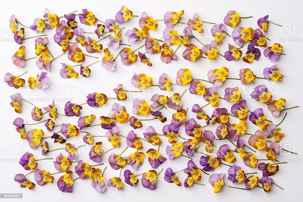 petal royalty-free stock photo