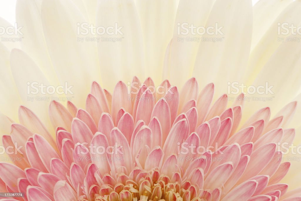 Petals Closeup stock photo