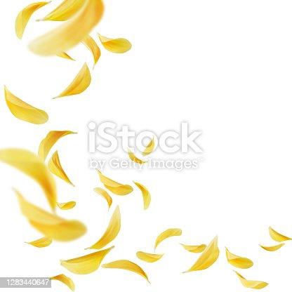 istock petals flying 1283440647