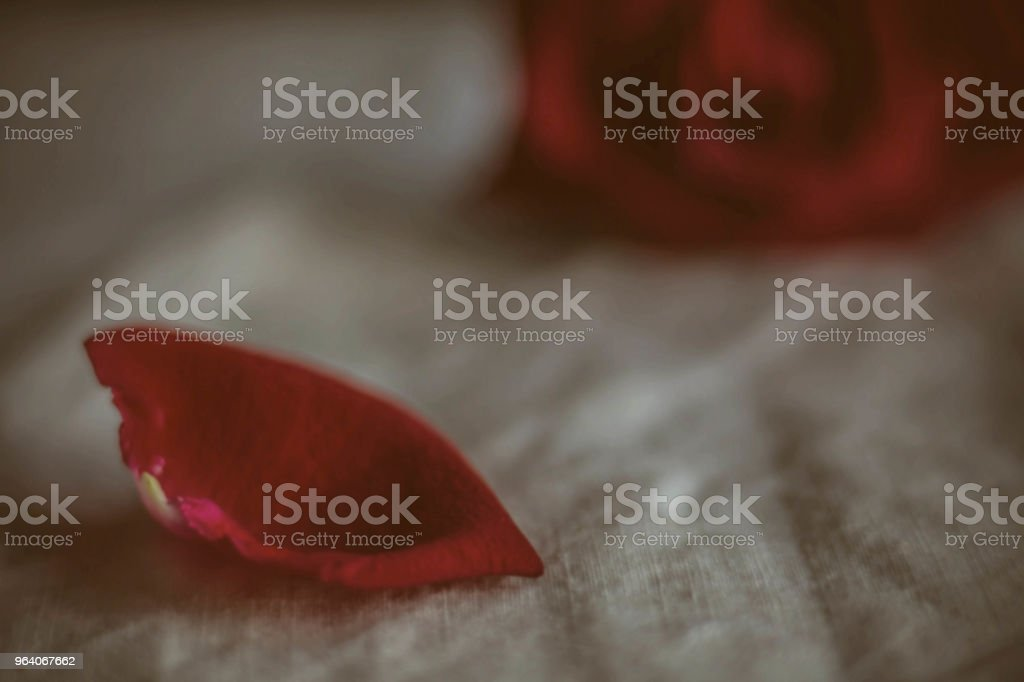 petals in the dark with blur. - Royalty-free Backgrounds Stock Photo