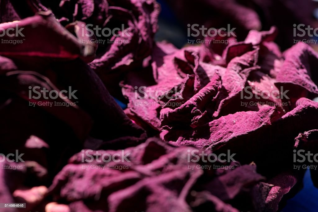 Petals keep giving, even when dry stock photo