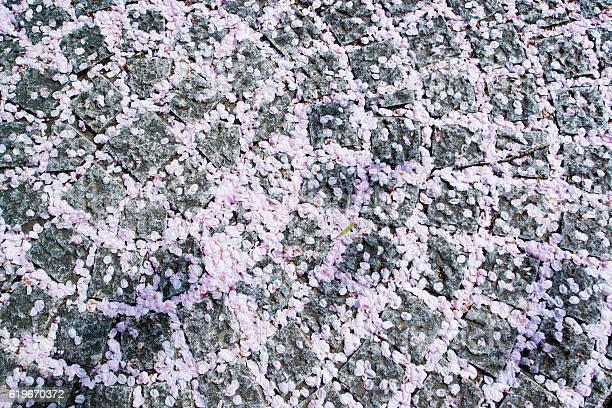 Petals of cherry blossoms picture id619670372?b=1&k=6&m=619670372&s=612x612&h=rr7o7zwqydpayixitjgc4kzmytzrw78s9kzdbofx1lk=