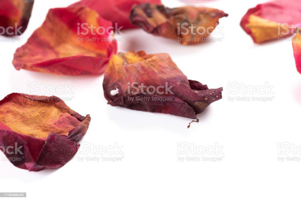 pétalas de rosas desvanecidas no fim branco do backgorund acima - foto de acervo