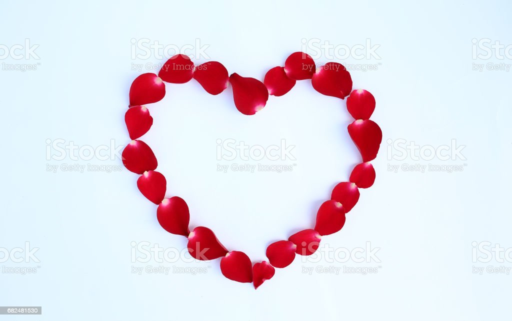 Petals of red rose flower in heart shape on white background. royalty-free stock photo