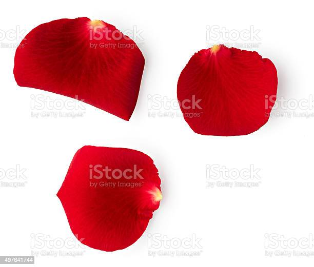 Petals of red rose picture id497641744?b=1&k=6&m=497641744&s=612x612&h=pib7rnn6voxpu5lt2mrzqth4ajdjyubwbmpya9ykx88=
