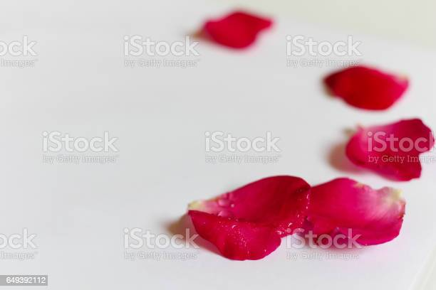 Petals red damask rose on white background copy space for text picture id649392112?b=1&k=6&m=649392112&s=612x612&h=y0gh9hjyfxde6pb   cugq9hvpmzpzczxwrow7r9a6s=