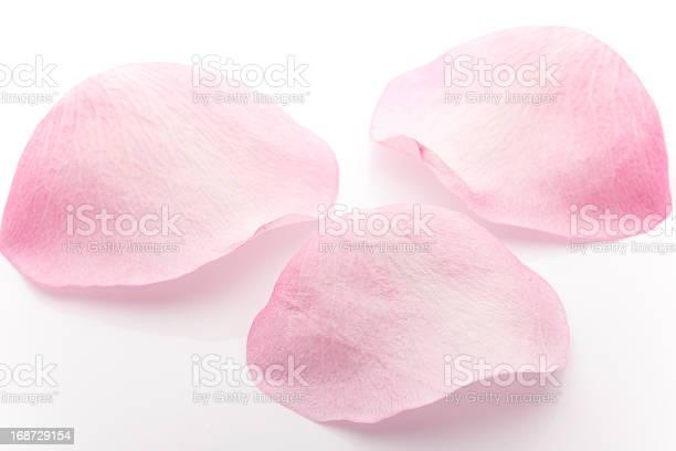 Petals rose picture id168729154?b=1&k=6&m=168729154&s=612x612&h=l8aia8rseaqi pu3v0kmw99qi n2f9meh3kvzecvluw=