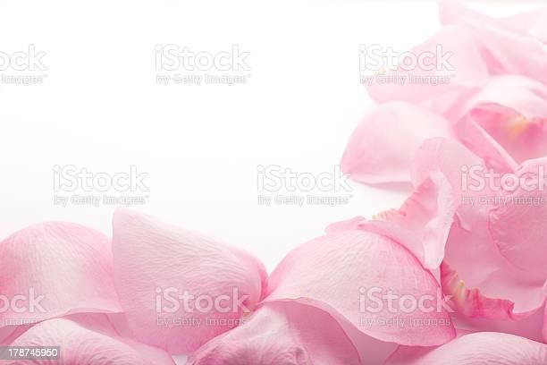 Petals rose picture id178745950?b=1&k=6&m=178745950&s=612x612&h=quw r dsbk8tlfoojhwtpxgpfhixgtg7uw v4u svem=
