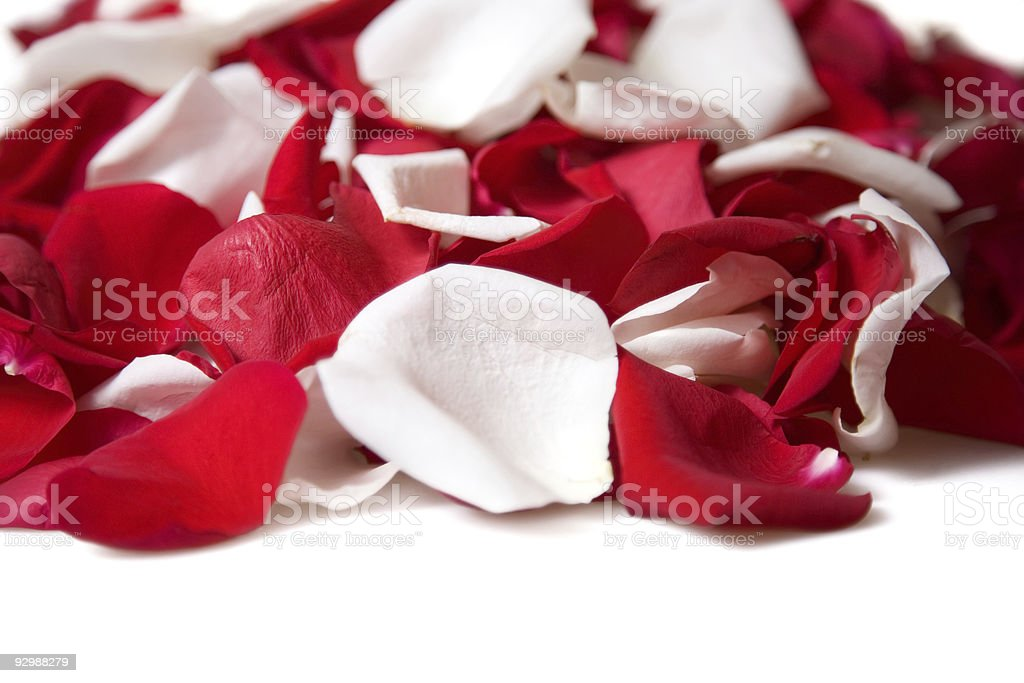 Petals rose royalty-free stock photo