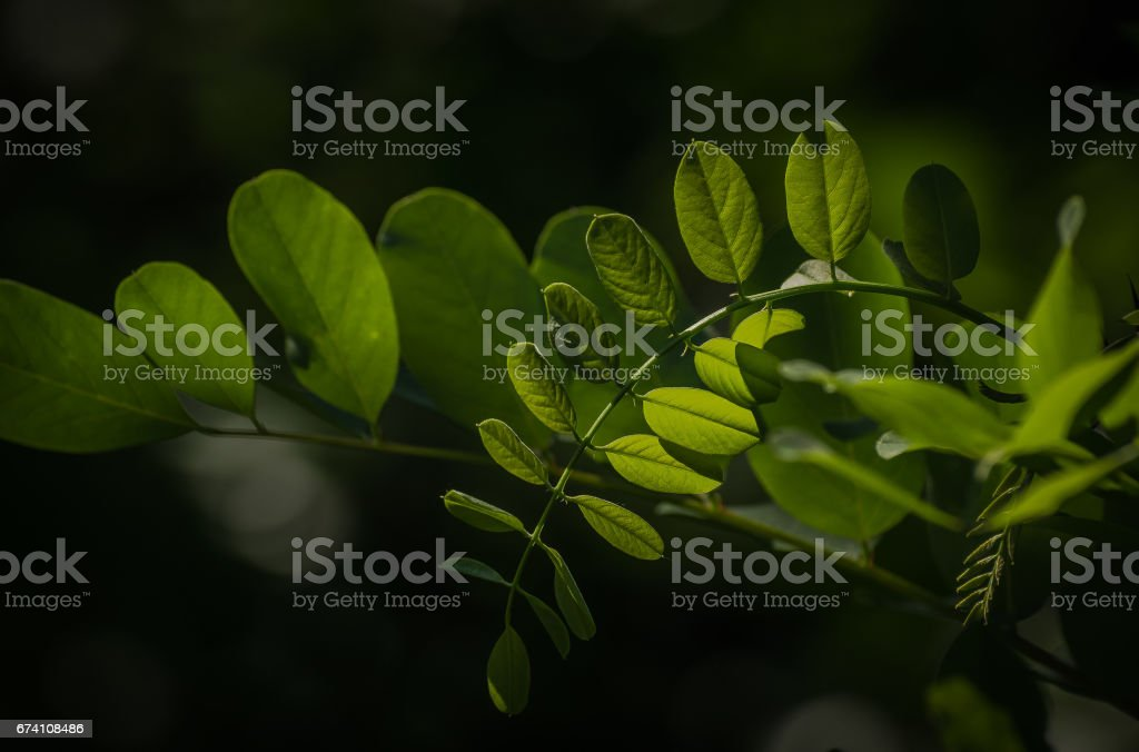 Petition royalty-free stock photo