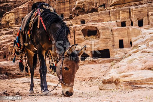 Horse resting next to the magnificent Nabatee tombs in Petra, Jordan
