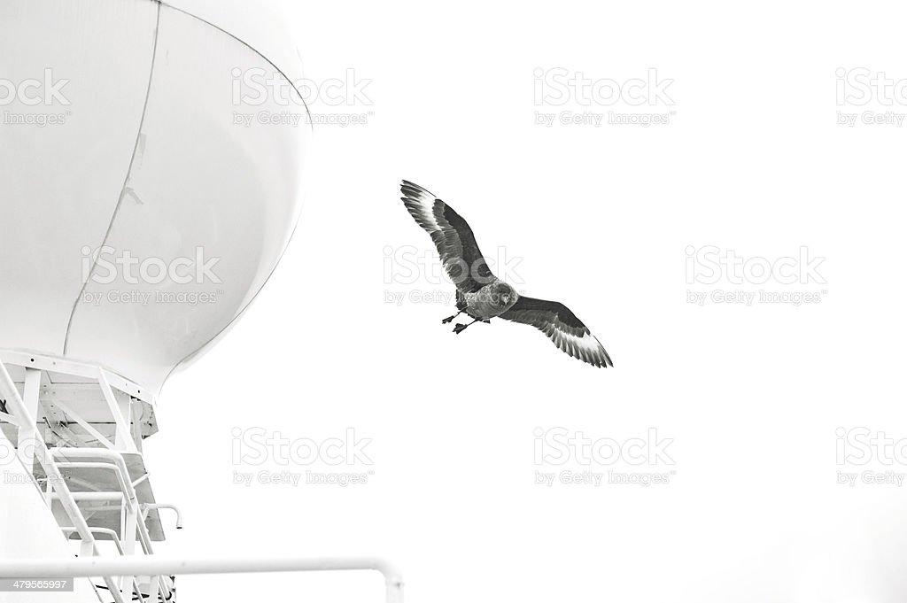 Petrel stock photo