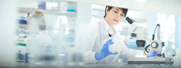 petri dish analysis female scientist in a busy research lab biochemist stock pictures, royalty-free photos & images