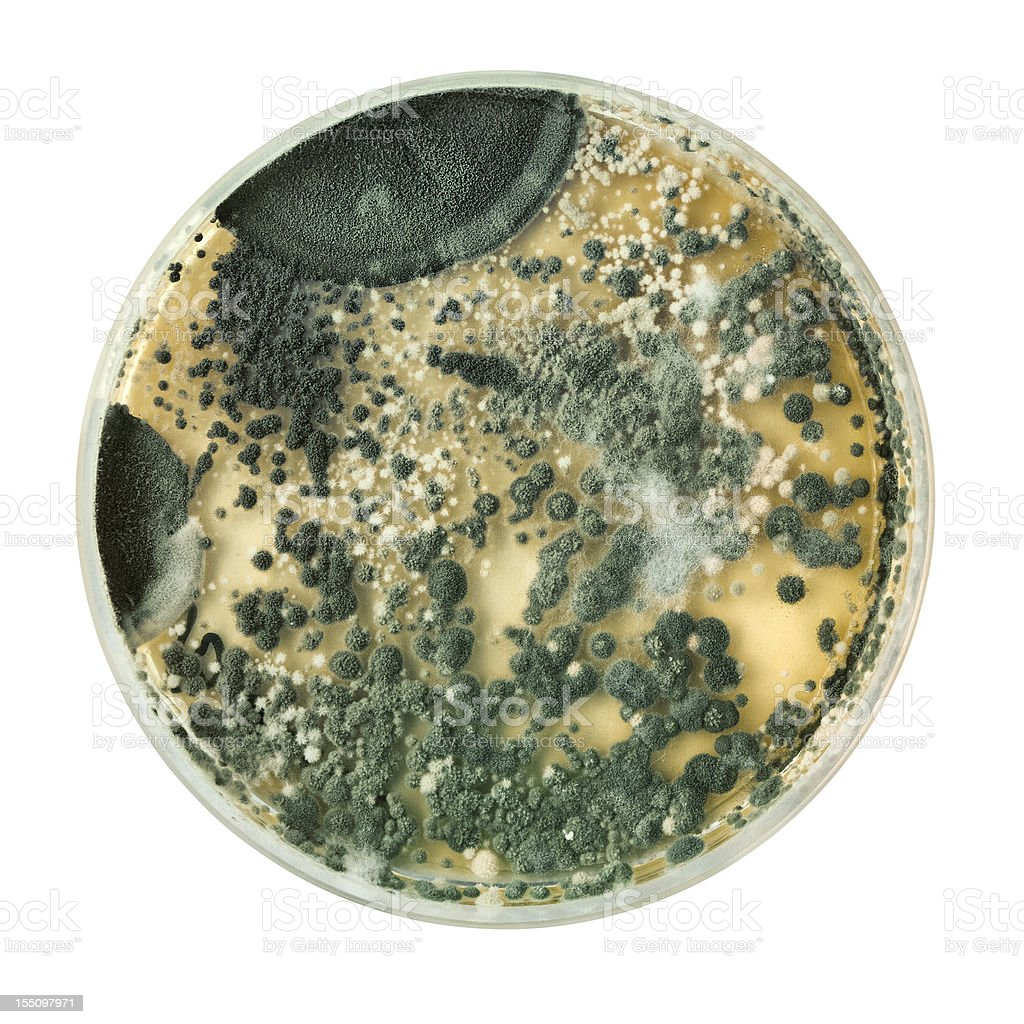 Petri dish on white stock photo