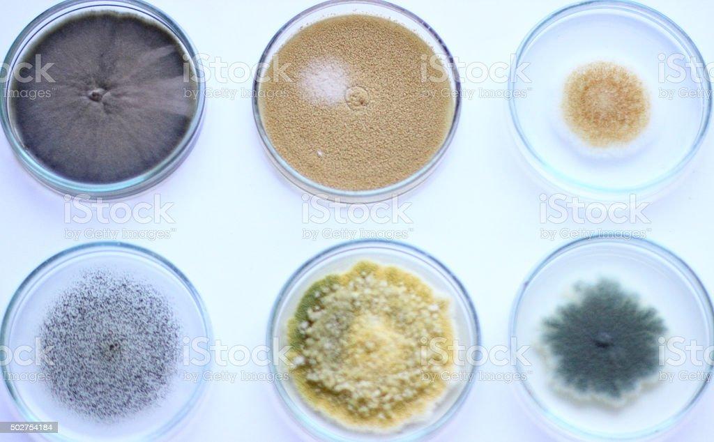 Petri dish on white stock photo