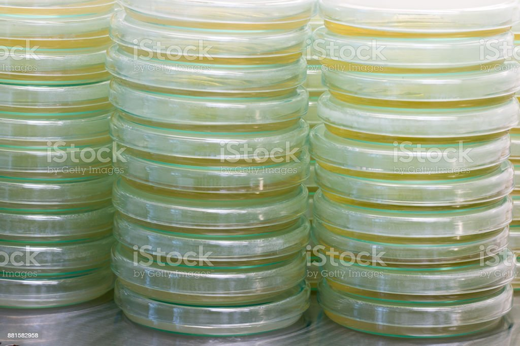 Petri dish or plate for Microbiology in Lab. stock photo