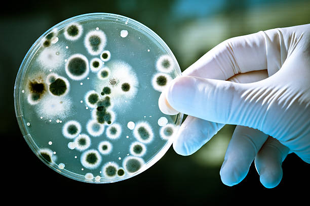 petri dish - microbiology stock pictures, royalty-free photos & images