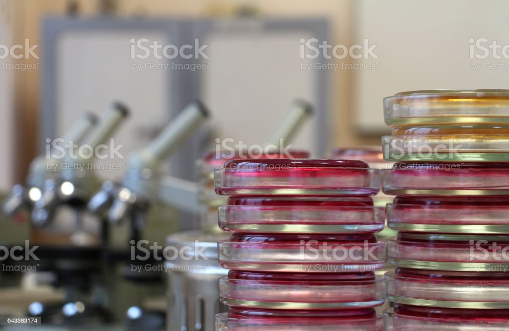 Petri dishes agar stacks  in microbiology lab on laboratory background stock photo