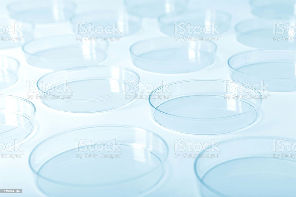 Petri dishes in a laboratory royalty-free stock photo