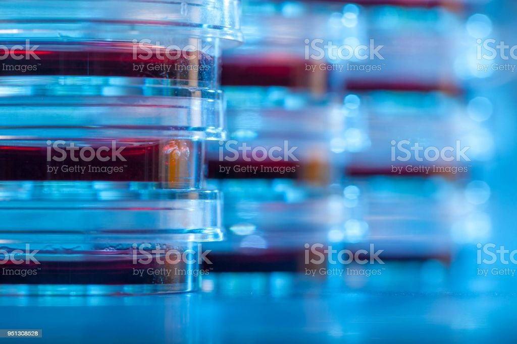 Petri dishes in blue light material. Laboratory concept. stock photo