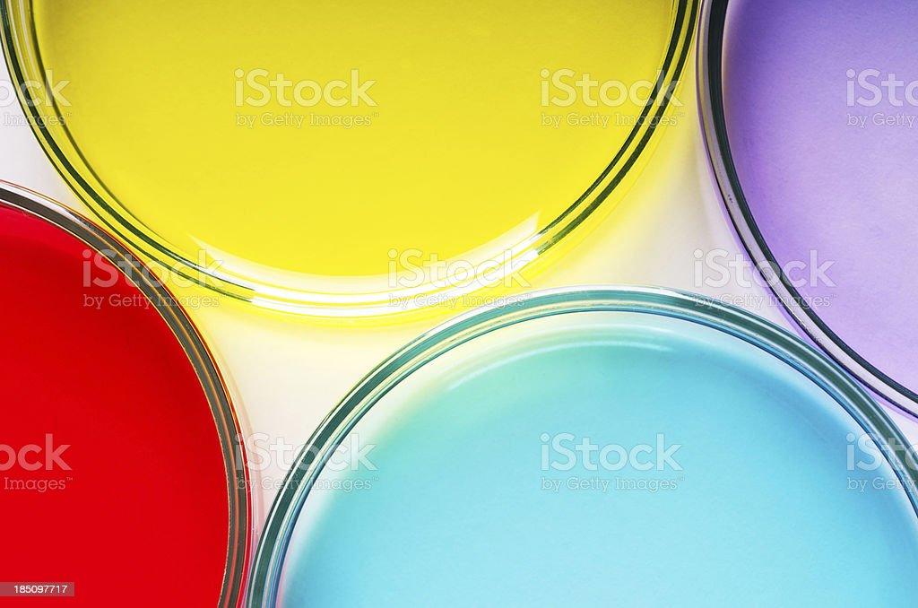 Petri dishes royalty-free stock photo