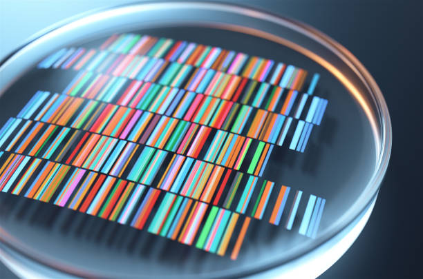 Petri dishes with samples for DNA sequencing,3d rendering. Petri dishes with samples for DNA sequencing,3d rendering. nucleotide stock pictures, royalty-free photos & images