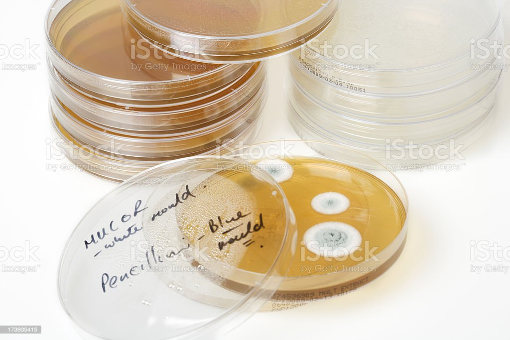 petri plates with bacteria and moulds stock photo