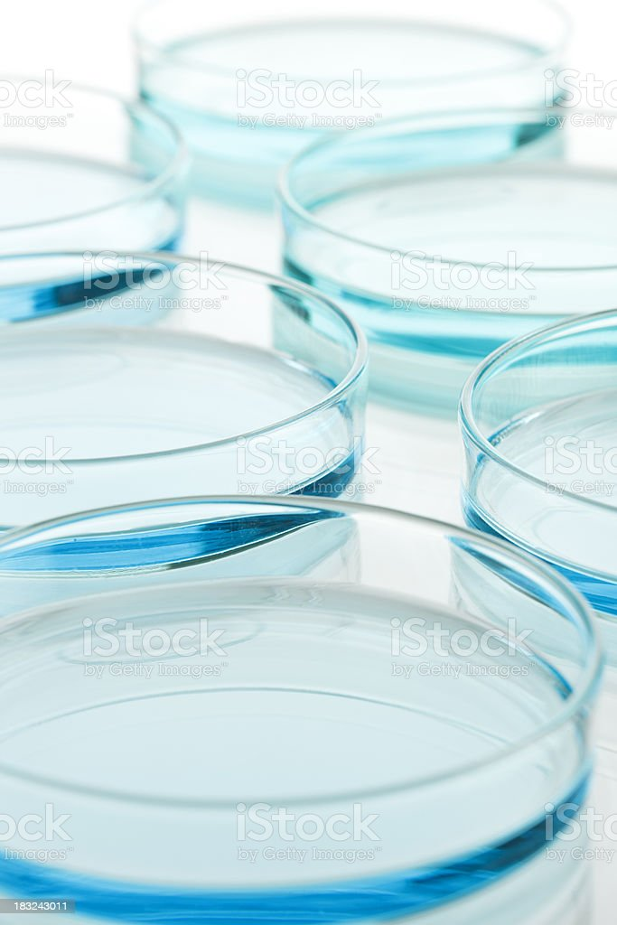 Petridish royalty-free stock photo