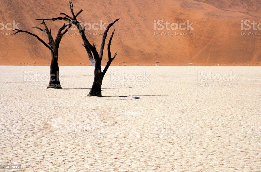 Petrified acacia in the Namib Desert, Namibia royalty-free stock photo
