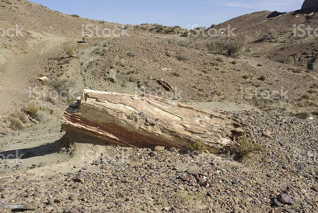 Petrified forest in Patagonia royalty-free stock photo