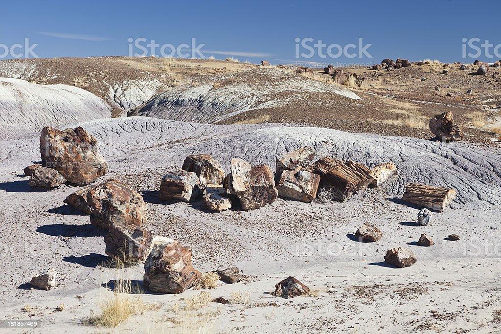 Petrified Forest National Park, Arizona stock photo