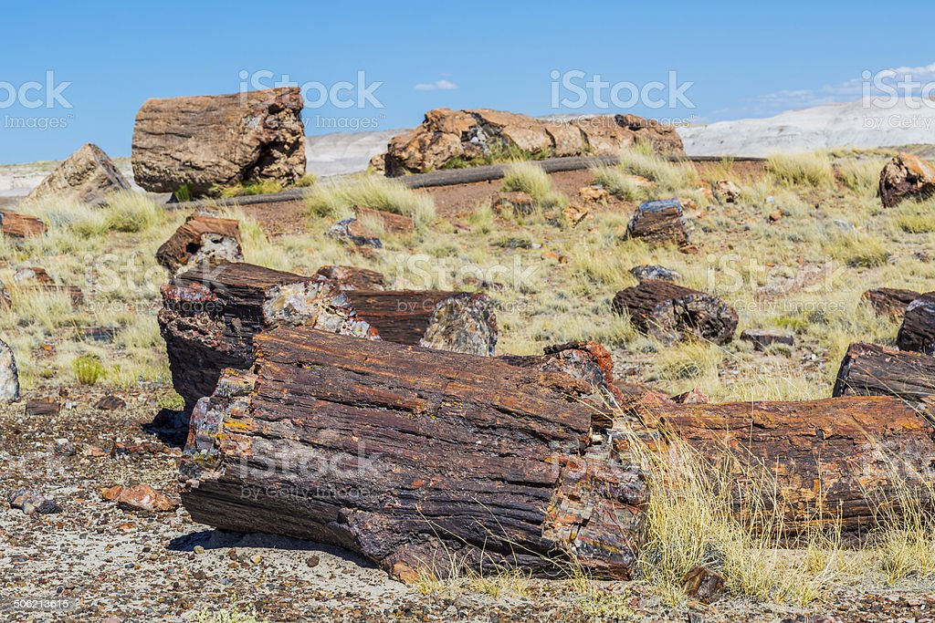 Petrified forest stock photo