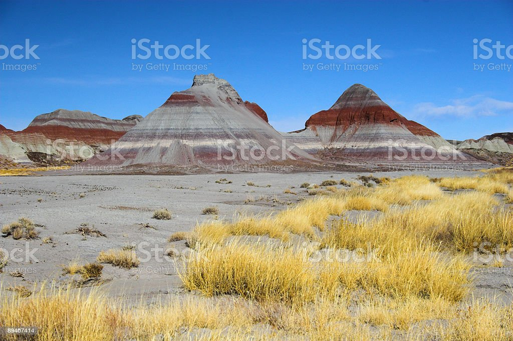 Petrified forest 免版稅 stock photo