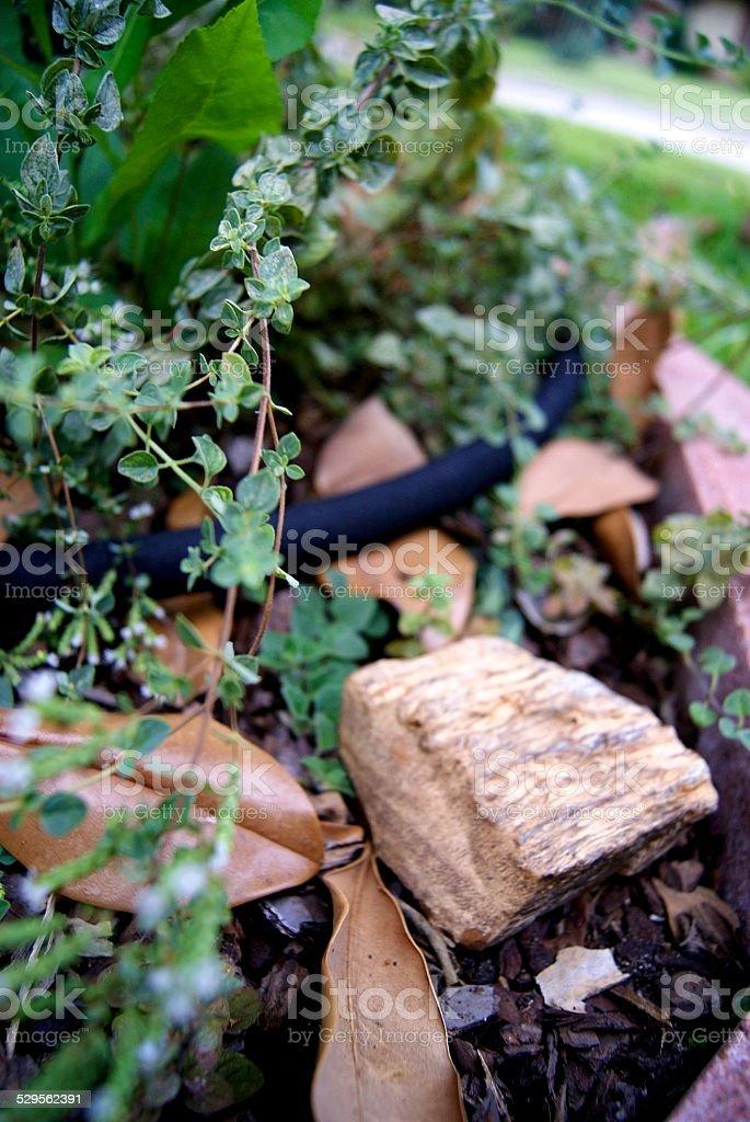 Petrified Herbs royalty-free stock photo